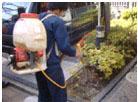 pHバランスA液剤散布による樹勢回復