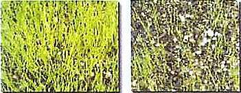 菌根菌の働き
