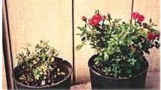 カビや菌に対する保護効果(左:未使用)
