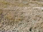 緑化の導入が困難な強酸性土壌
