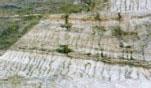 酸性硫酸塩土壌